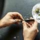 """""""Cannabis in Gent: te banaliseren of een biotoop voor criminaliteit ?"""""""